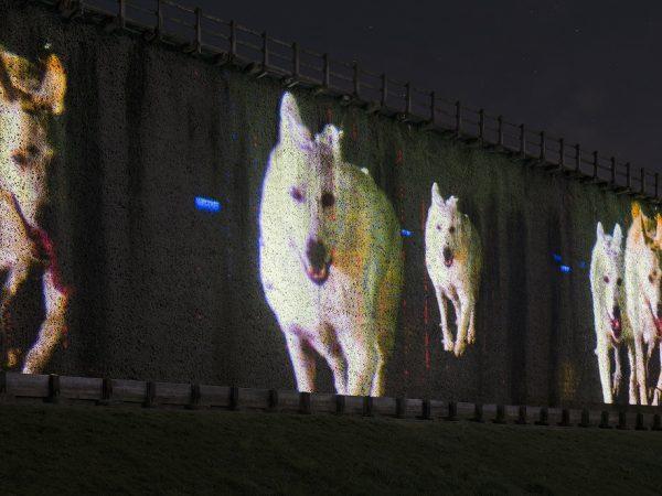 lichtsicht 6   Projektions-Biennale